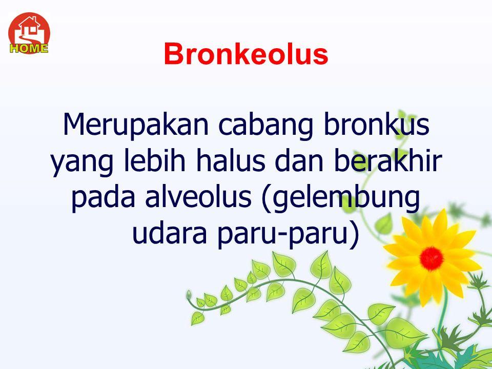 Bronkus Adalah cabang batang tenggorok yang masuk ke dalam paru paru. Bronkus sebelah kiri bercabang dua dan sebelah kanan bercabang tiga.