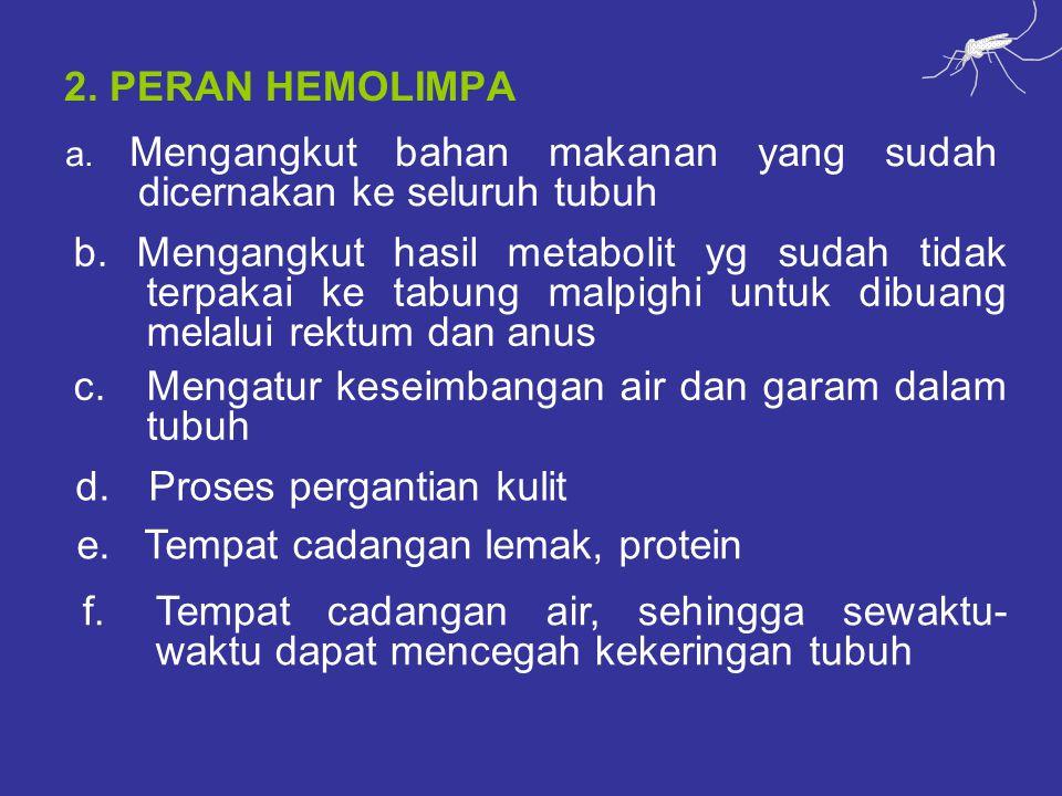 2. PERAN HEMOLIMPA a. Mengangkut bahan makanan yang sudah dicernakan ke seluruh tubuh b.