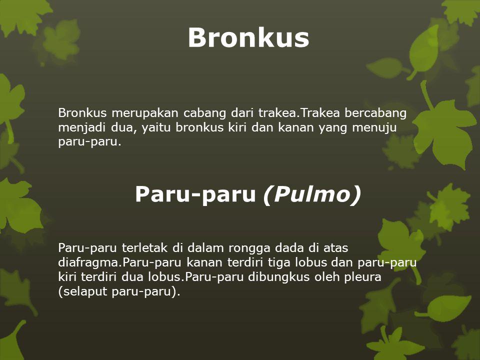Paru-paru (Pulmo) Bronkus merupakan cabang dari trakea.Trakea bercabang menjadi dua, yaitu bronkus kiri dan kanan yang menuju paru-paru. Paru-paru ter