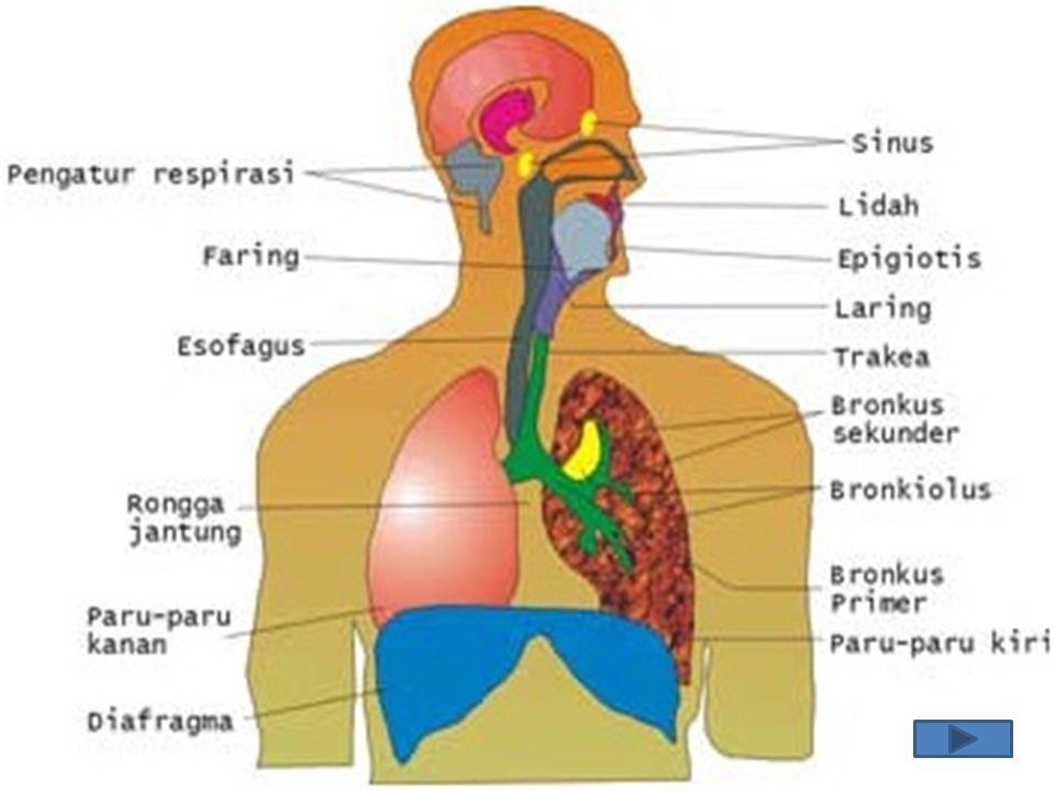 STRUKTUR SISTEM PERNAPASAN 1.rongga mulut 2. Pangkal tenggorokan (Faring) 3.