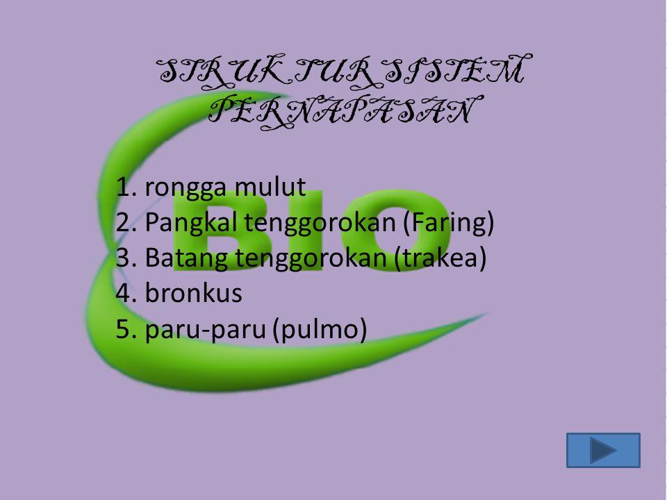STRUKTUR SISTEM PERNAPASAN 1. rongga mulut 2. Pangkal tenggorokan (Faring) 3. Batang tenggorokan (trakea) 4. bronkus 5. paru-paru (pulmo)