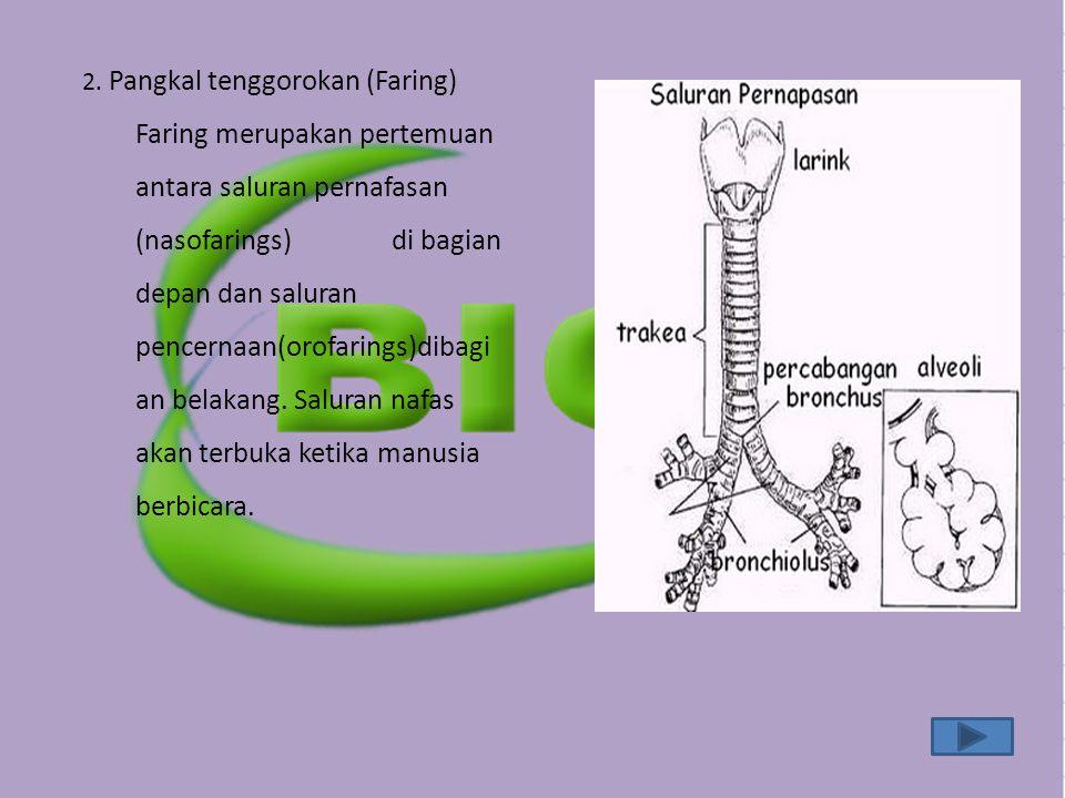2. Pangkal tenggorokan (Faring) Faring merupakan pertemuan antara saluran pernafasan (nasofarings) di bagian depan dan saluran pencernaan(orofarings)d