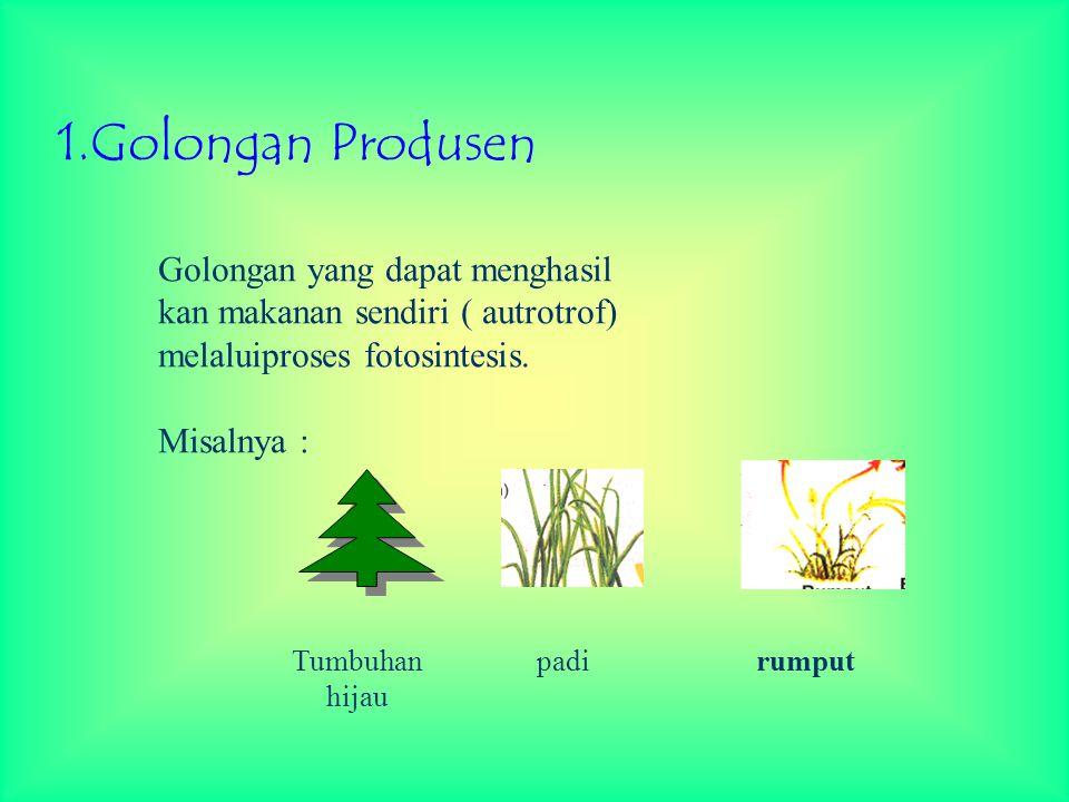 1.Golongan Produsen Golongan yang dapat menghasil kan makanan sendiri ( autrotrof) melaluiproses fotosintesis. Misalnya : Tumbuhan hijau padi rumput