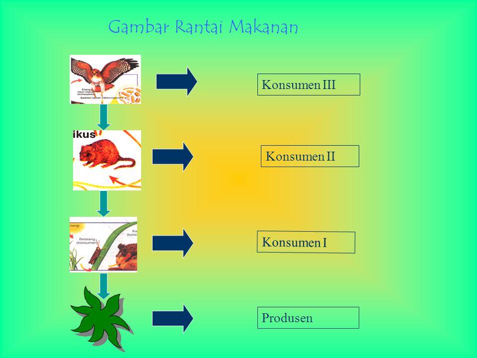 Gambar Rantai Makanan Konsumen II Konsumen III Konsumen I Produsen