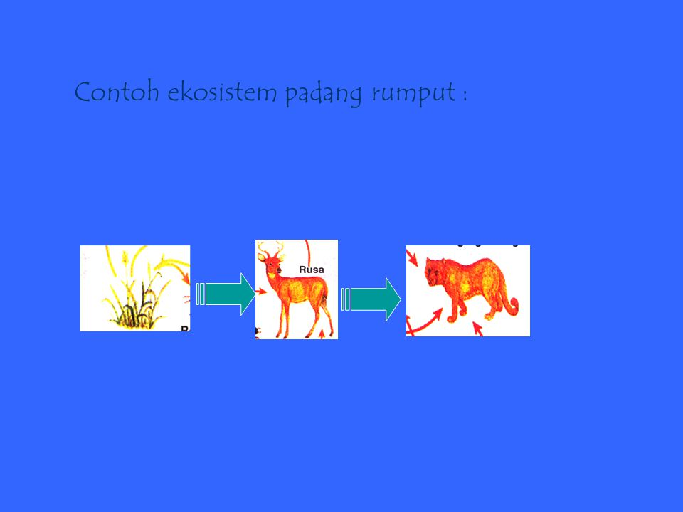 Contoh ekosistem padang rumput :