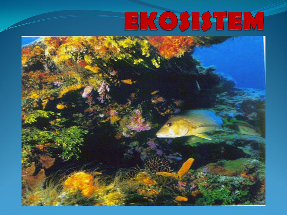Konsep: Mana di antara daftar berikut yang merupakan ekosistem.