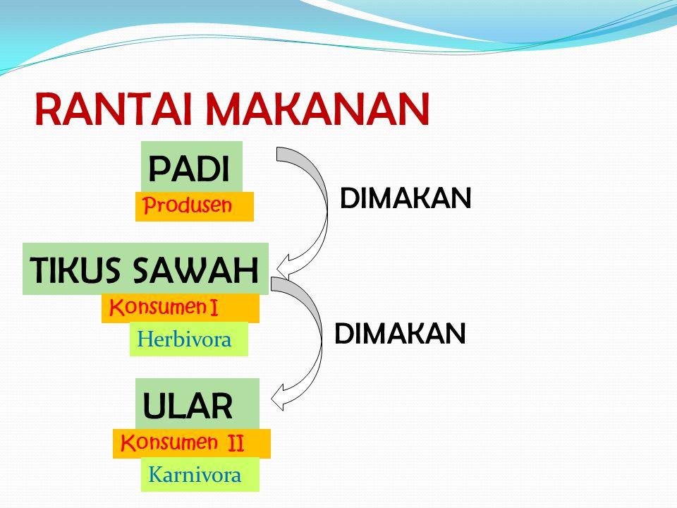 PIRAMIDA MAKANAN PRODUSEN(SUMBER ENERGI) KONSUMEN TINGKAT I (HERBIVORA) KONSUMEN TINGKAT II (KARNIVORA) PERPINDAHAN ENERGI PERPINDAHAN ENERGI