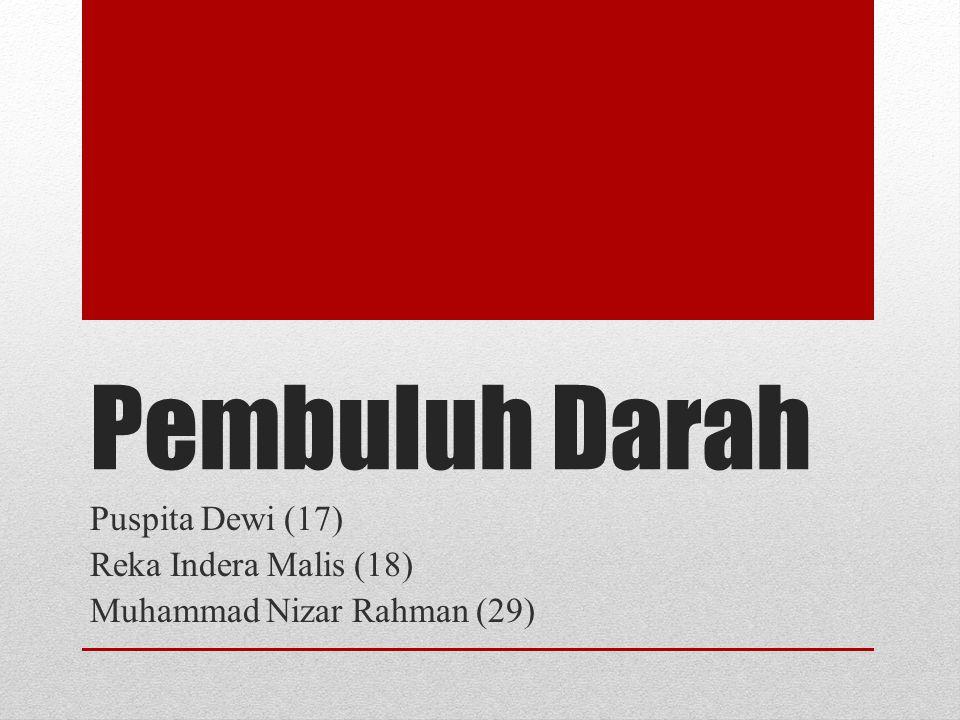 Pembuluh Darah Puspita Dewi (17) Reka Indera Malis (18) Muhammad Nizar Rahman (29)