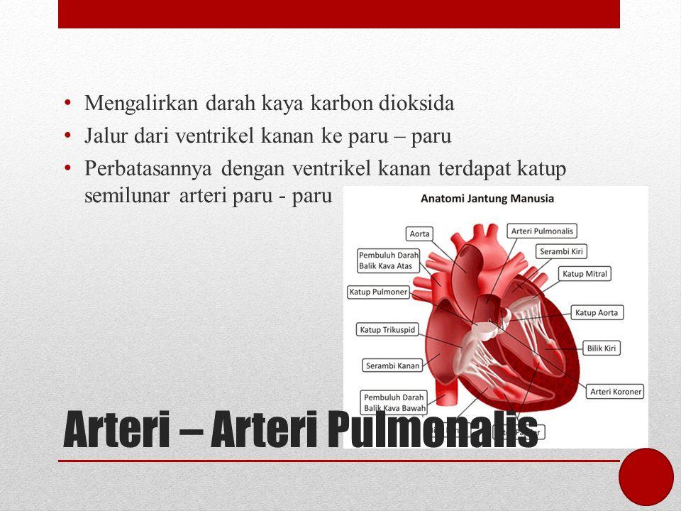 Arteri – Arteri Pulmonalis Mengalirkan darah kaya karbon dioksida Jalur dari ventrikel kanan ke paru – paru Perbatasannya dengan ventrikel kanan terda