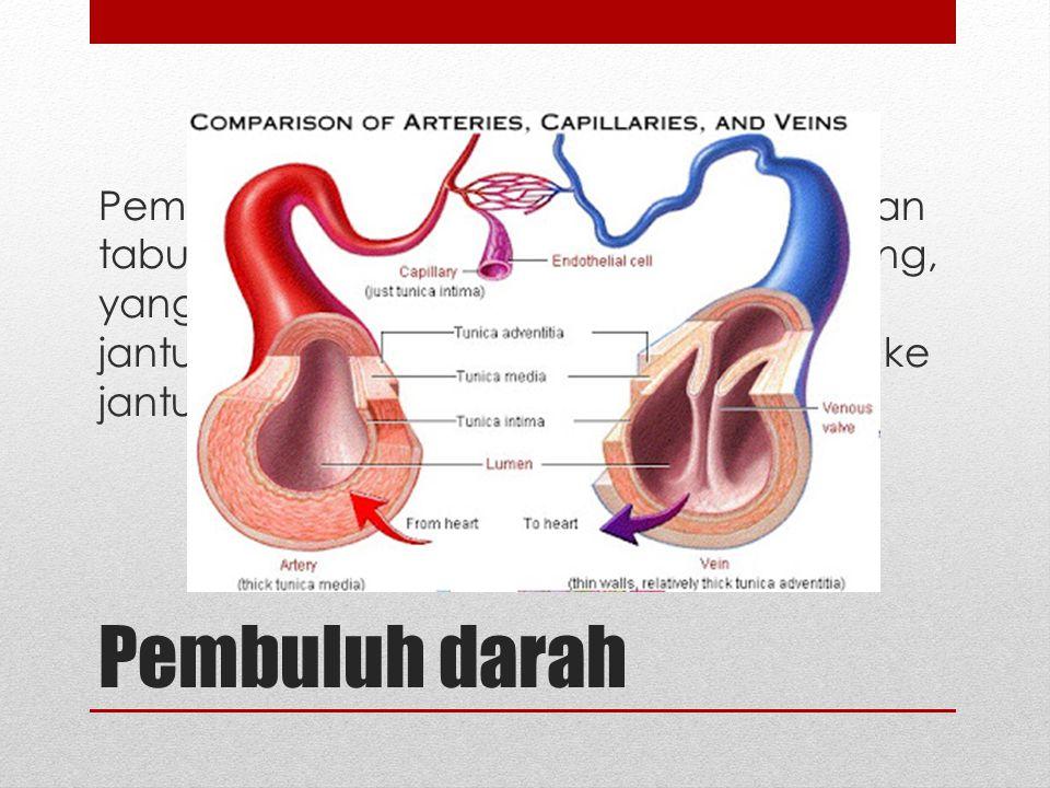 Pembuluh darah Pembuluh darah merupakan serangkaian tabung (saluran) tertutup dan bercabang, yang berfungsi membawa darah dari jantung ke jaringan, ke