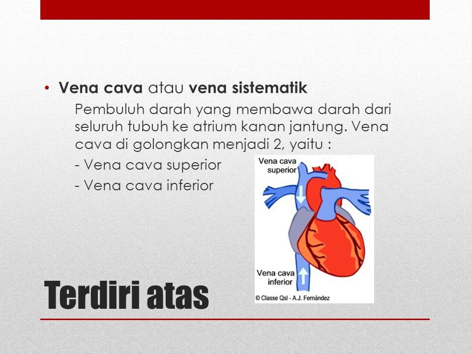 Terdiri atas Vena cava atau vena sistematik Pembuluh darah yang membawa darah dari seluruh tubuh ke atrium kanan jantung. Vena cava di golongkan menja