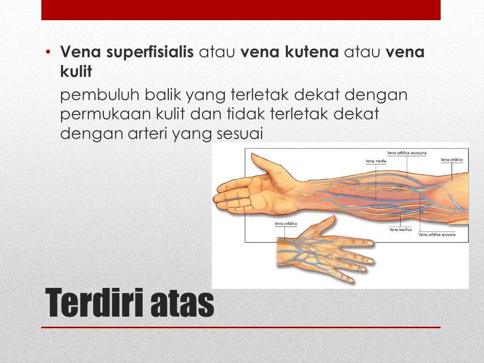 Terdiri atas Vena superfisialis atau vena kutena atau vena kulit pembuluh balik yang terletak dekat dengan permukaan kulit dan tidak terletak dekat de
