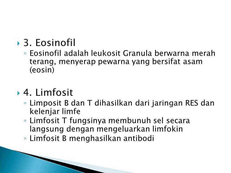  3. Eosinofil ◦ Eosinofil adalah leukosit Granula berwarna merah terang, menyerap pewarna yang bersifat asam (eosin)  4. Limfosit ◦ Limposit B dan T