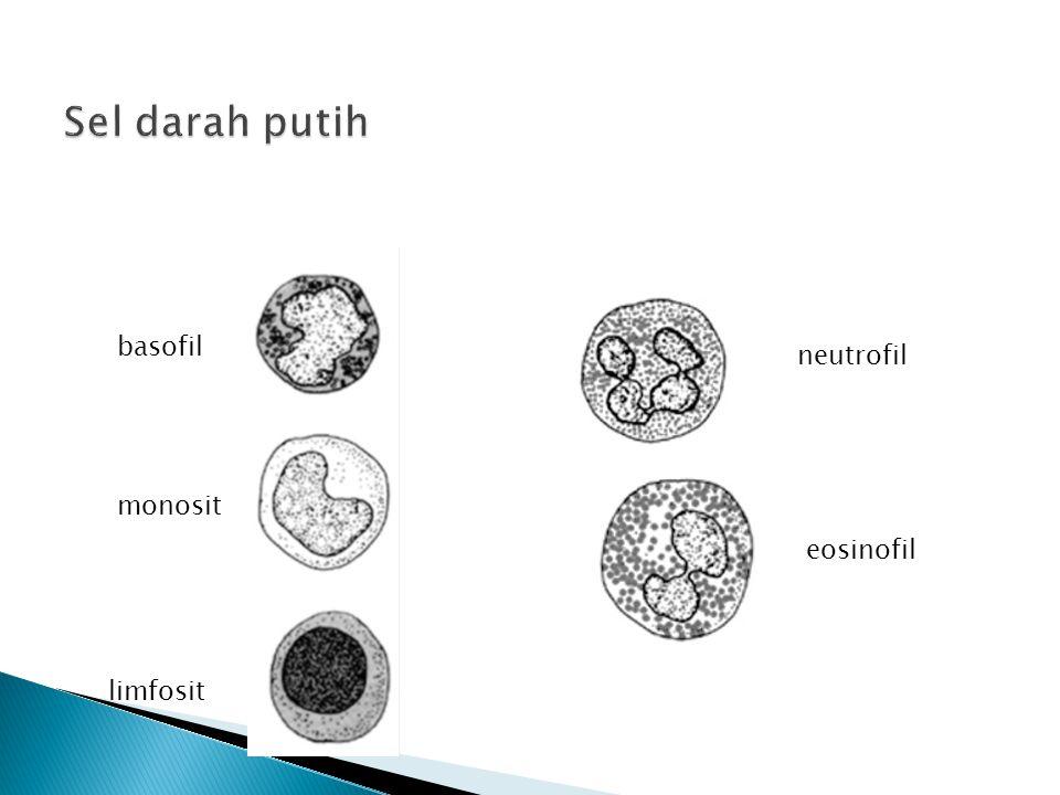 basofil monosit limfosit neutrofil eosinofil