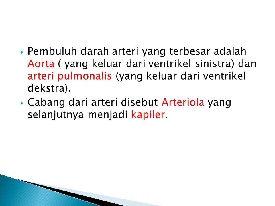  Pembuluh darah arteri yang terbesar adalah Aorta ( yang keluar dari ventrikel sinistra) dan arteri pulmonalis (yang keluar dari ventrikel dekstra).