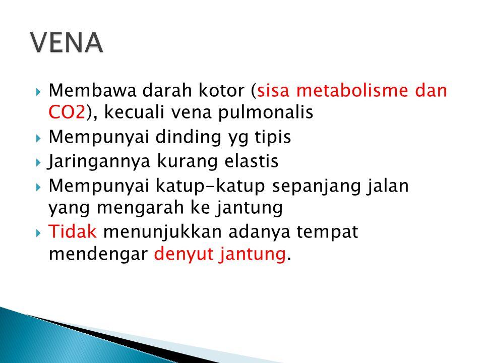  Membawa darah kotor (sisa metabolisme dan CO2), kecuali vena pulmonalis  Mempunyai dinding yg tipis  Jaringannya kurang elastis  Mempunyai katup-