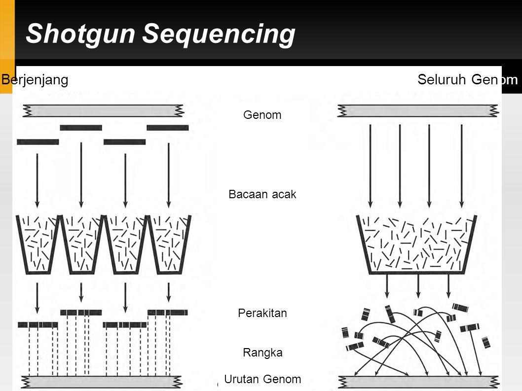 Pengurutan Genom: Gen. 2 2005 (30 tahun setelah Sanger)