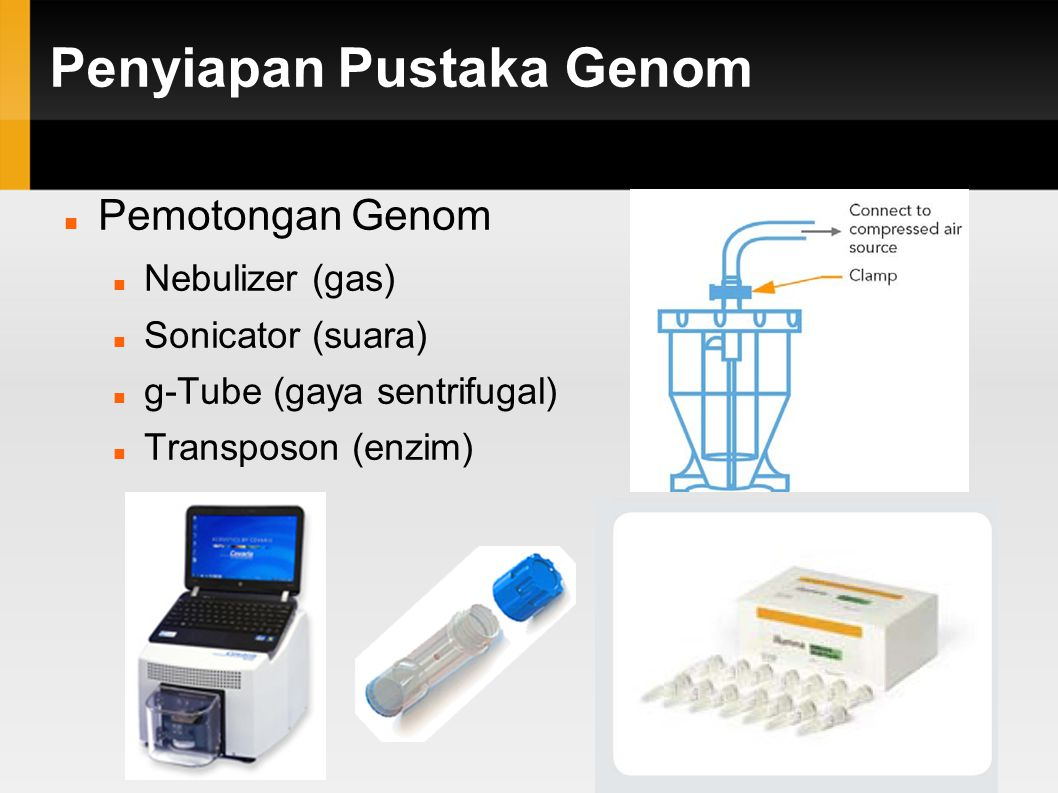 Penyortiran ukuran potongan Proses pembentukan gugus dan pembacaan DNA oleh mesin sekuenser hanya efektif pada panjang potongan DNA tertentu (100 – 500 pb)