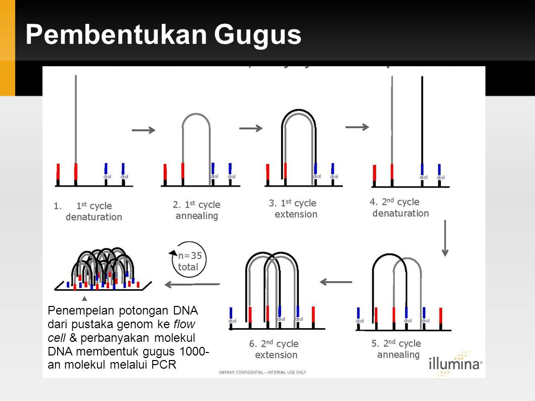 Pembacaan urutan DNA Illumina: pengurutan melalui sintesis (sequencing-by-synthesis, SBS)