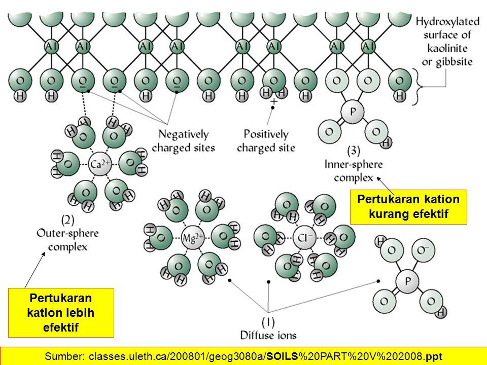 Pertukaran kation lebih efektif Pertukaran kation kurang efektif Sumber: classes.uleth.ca/200801/geog3080a/SOILS%20PART%20V%202008.ppt