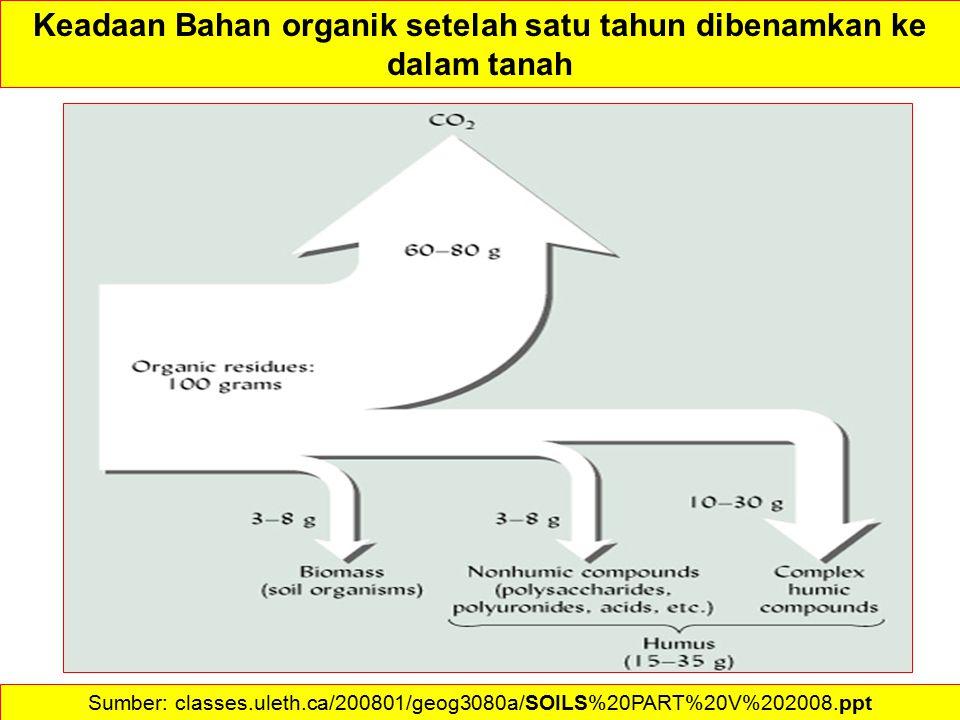 Keadaan Bahan organik setelah satu tahun dibenamkan ke dalam tanah Sumber: classes.uleth.ca/200801/geog3080a/SOILS%20PART%20V%202008.ppt