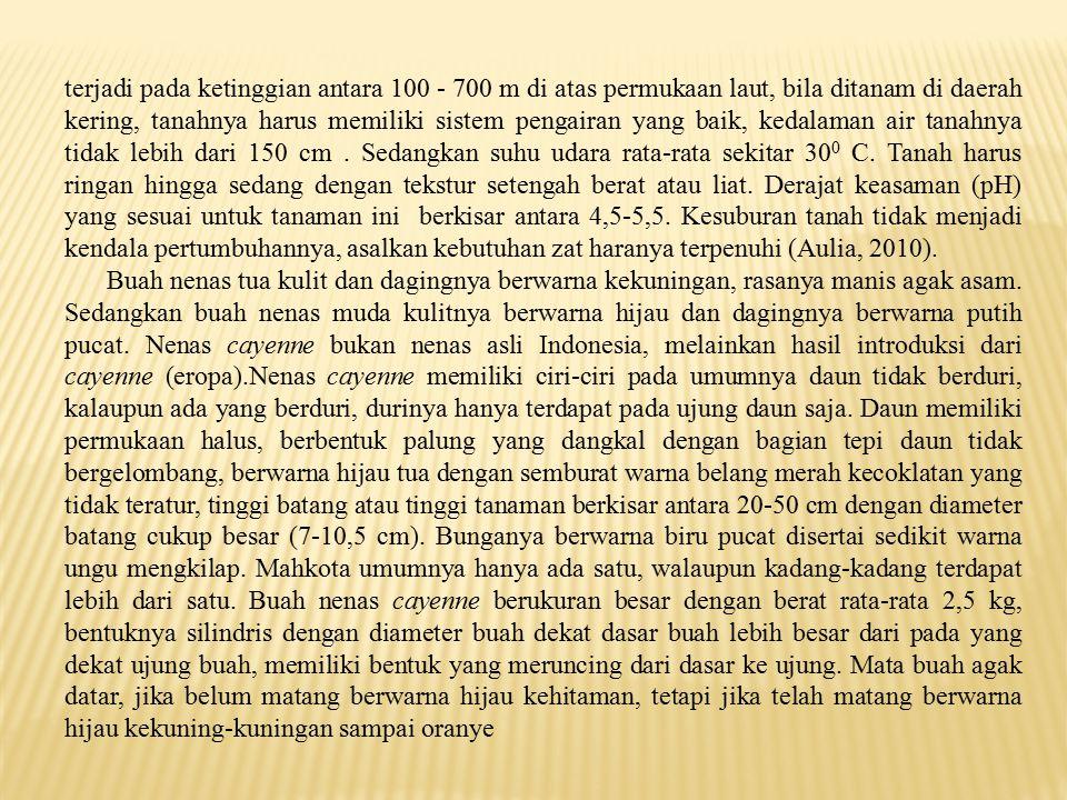 BAB V KESIMPULAN DAN SARAN 5.1.Kesimpulan a.Dari hasil penelitian analisis kandungan karbohidrat pada nenas cayenne tua dan muda di Dusun Telaga Piru dan Dusun Temi di dapatkan hasil kandungan karbohidrat pada nenas cayenne tua di Dusun Telaga Piru sebesar 13,37 % dan kandungan karbohidrat pada nenas cayenne tua di Dusun Temi sebesar 12,86 % dan kandungan karbohidrat pada nenas cayenne muda di Dusun Telaga Piru sebesar 11,36 % dan kandungan karbohidrat pada nenas cayenne muda di Dusun Temi sebesar 10,86 %.