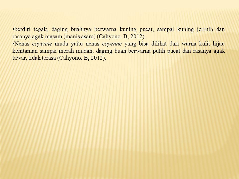 Berdasarkan hasil pengamatan tempat tumbuh buah nenas cayenne (Ananas comosus (L) Merr) pada ke dua tempat tumbuh yaitu Dusun Telaga Piru dan Dusun Temi Kecamatan Seram Barat, Kabupaten Seram Bagian Barat menunjukkan karakter yang berbeda.