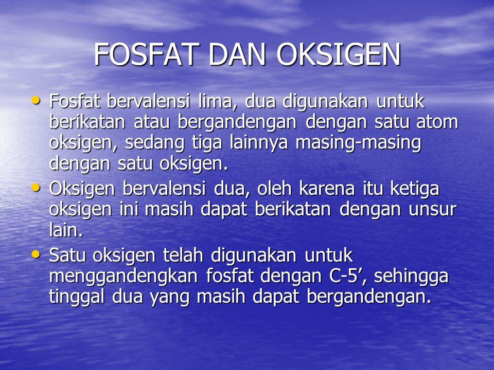 FOSFAT DAN OKSIGEN Fosfat bervalensi lima, dua digunakan untuk berikatan atau bergandengan dengan satu atom oksigen, sedang tiga lainnya masing-masing
