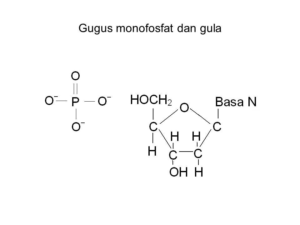 Gugus monofosfat dan gula