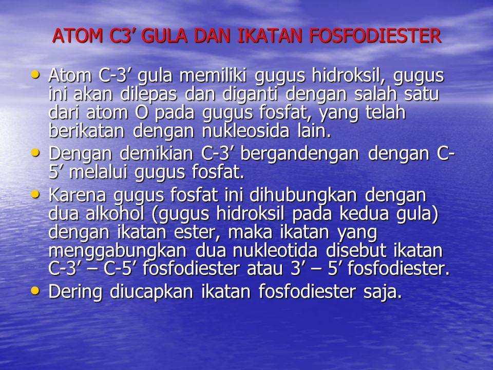 ATOM C3' GULA DAN IKATAN FOSFODIESTER Atom C-3' gula memiliki gugus hidroksil, gugus ini akan dilepas dan diganti dengan salah satu dari atom O pada g
