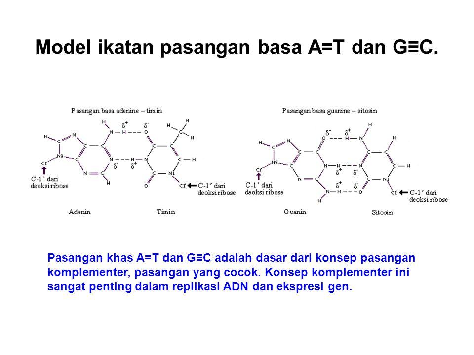 Model ikatan pasangan basa A=T dan G≡C. Pasangan khas A=T dan G≡C adalah dasar dari konsep pasangan komplementer, pasangan yang cocok. Konsep kompleme