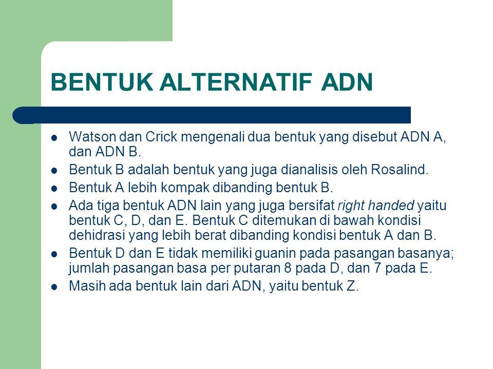 BENTUK ALTERNATIF ADN Watson dan Crick mengenali dua bentuk yang disebut ADN A, dan ADN B. Bentuk B adalah bentuk yang juga dianalisis oleh Rosalind.