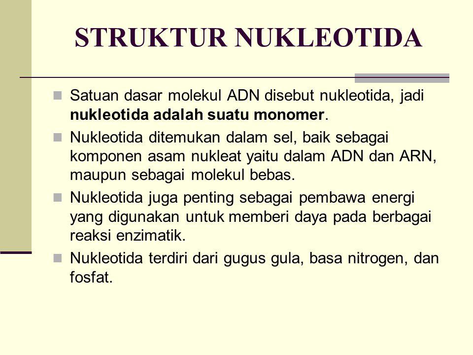 STRUKTUR NUKLEOTIDA Satuan dasar molekul ADN disebut nukleotida, jadi nukleotida adalah suatu monomer. Nukleotida ditemukan dalam sel, baik sebagai ko