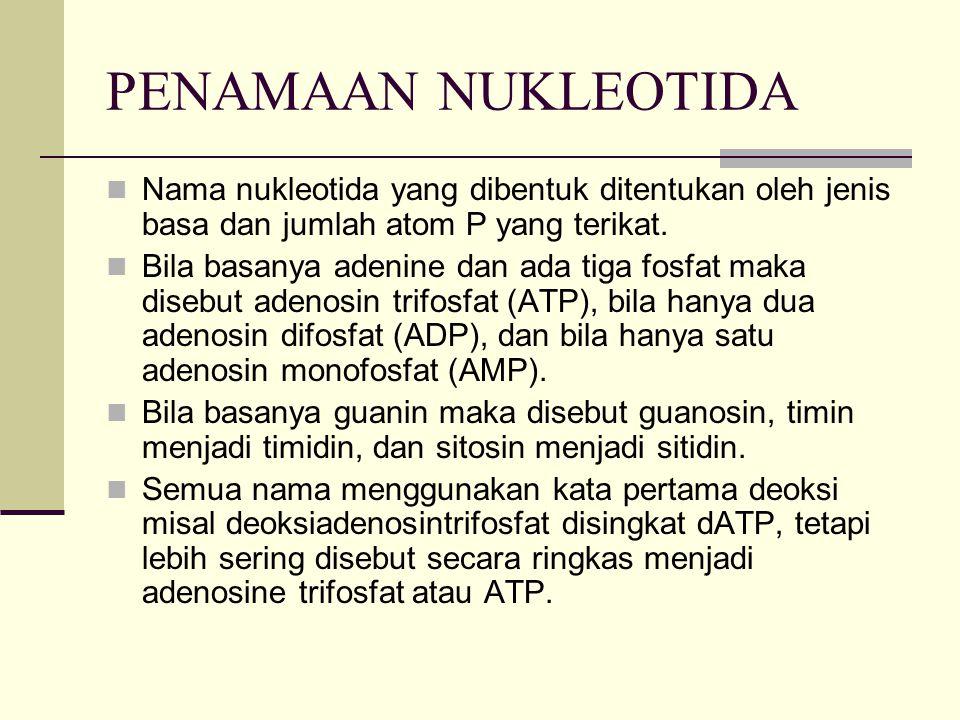 PENAMAAN NUKLEOTIDA Nama nukleotida yang dibentuk ditentukan oleh jenis basa dan jumlah atom P yang terikat. Bila basanya adenine dan ada tiga fosfat