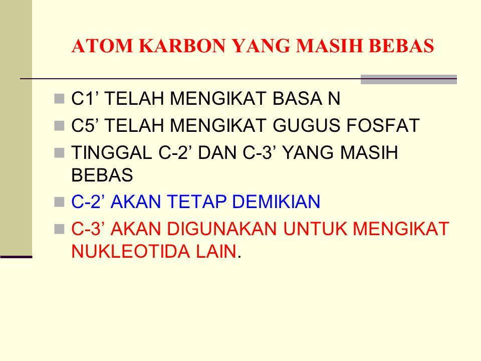 ATOM KARBON YANG MASIH BEBAS C1' TELAH MENGIKAT BASA N C5' TELAH MENGIKAT GUGUS FOSFAT TINGGAL C-2' DAN C-3' YANG MASIH BEBAS C-2' AKAN TETAP DEMIKIAN