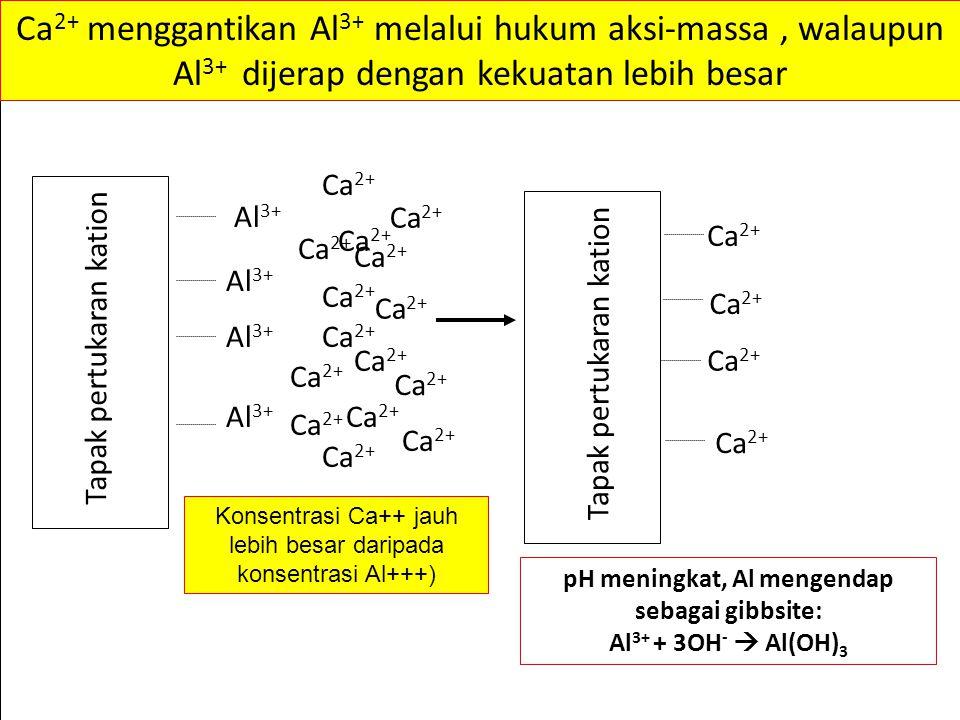 Al 3+ Ca 2+ Tapak pertukaran kation Ca 2+ Tapak pertukaran kation Ca 2+ Ca 2+ menggantikan Al 3+ melalui hukum aksi-massa, walaupun Al 3+ dijerap dengan kekuatan lebih besar pH meningkat, Al mengendap sebagai gibbsite: Al 3+ + 3OH -  Al(OH) 3 Konsentrasi Ca++ jauh lebih besar daripada konsentrasi Al+++)