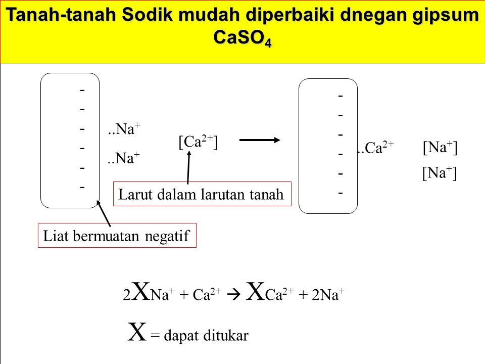 Tanah-tanah Sodik mudah diperbaiki dnegan gipsum CaSO 4 ------------..Na + [Ca 2+ ] ------------..Ca 2+ [Na + ] 2 X Na + + Ca 2+  X Ca 2+ + 2Na + Liat bermuatan negatif Larut dalam larutan tanah X = dapat ditukar