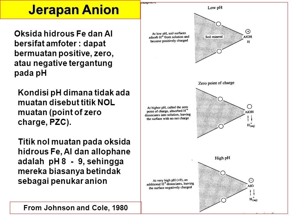 From Johnson and Cole, 1980 Jerapan Anion Oksida hidrous Fe dan Al bersifat amfoter : dapat bermuatan positive, zero, atau negative tergantung pada pH Kondisi pH dimana tidak ada muatan disebut titik NOL muatan (point of zero charge, PZC).