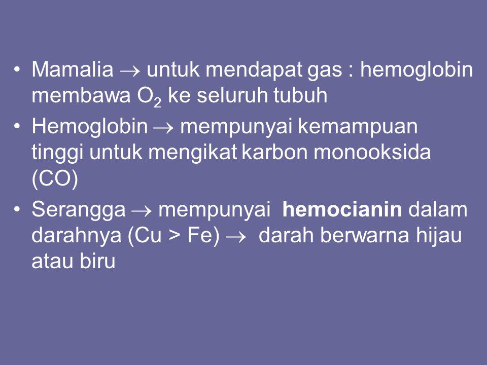 Mamalia  untuk mendapat gas : hemoglobin membawa O 2 ke seluruh tubuh Hemoglobin  mempunyai kemampuan tinggi untuk mengikat karbon monooksida (CO) S