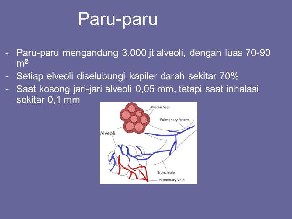 Paru-paru -Paru-paru mengandung 3.000 jt alveoli, dengan luas 70-90 m 2 -Setiap elveoli diselubungi kapiler darah sekitar 70% -Saat kosong jari-jari a