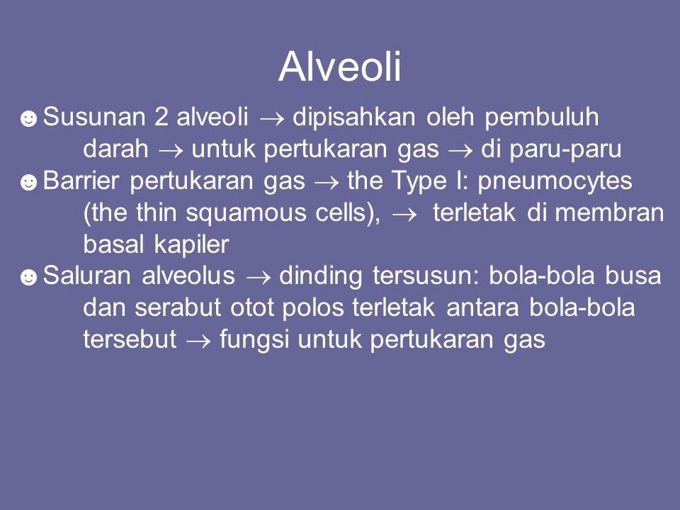 ☻Susunan 2 alveoli  dipisahkan oleh pembuluh darah  untuk pertukaran gas  di paru-paru ☻Barrier pertukaran gas  the Type I: pneumocytes (the thin