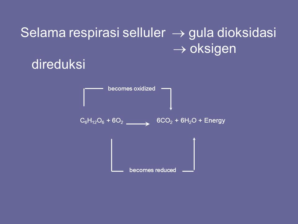 Selama respirasi selluler  gula dioksidasi  oksigen direduksi C 6 H 12 O 6 + 6O 2 6CO 2 + 6H 2 O + Energy becomes oxidized becomes reduced
