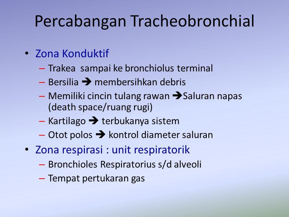 Zona Konduktif – Trakea sampai ke bronchiolus terminal – Bersilia  membersihkan debris – Memiliki cincin tulang rawan  Saluran napas (death space/ru