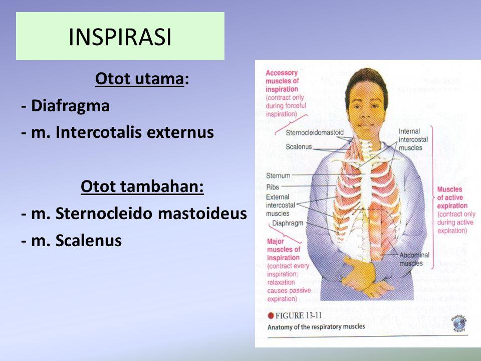 INSPIRASI Otot utama: - Diafragma - m. Intercotalis externus Otot tambahan: - m. Sternocleido mastoideus - m. Scalenus