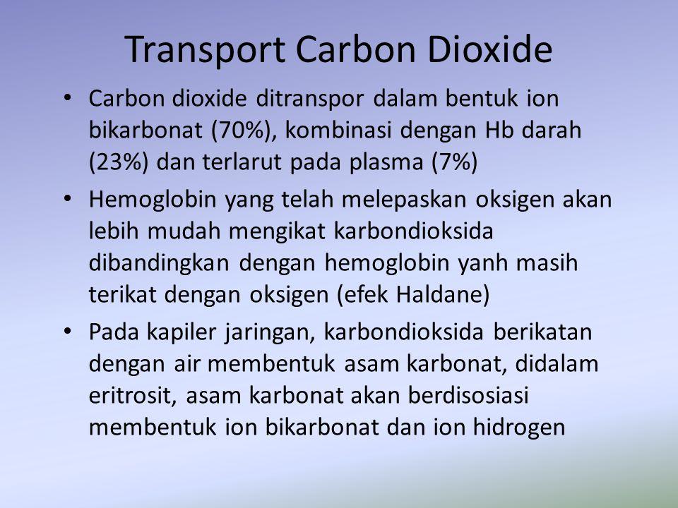 Transport Carbon Dioxide Carbon dioxide ditranspor dalam bentuk ion bikarbonat (70%), kombinasi dengan Hb darah (23%) dan terlarut pada plasma (7%) He