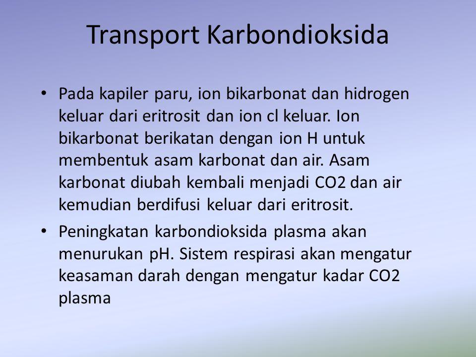 Transport Karbondioksida Pada kapiler paru, ion bikarbonat dan hidrogen keluar dari eritrosit dan ion cl keluar. Ion bikarbonat berikatan dengan ion H