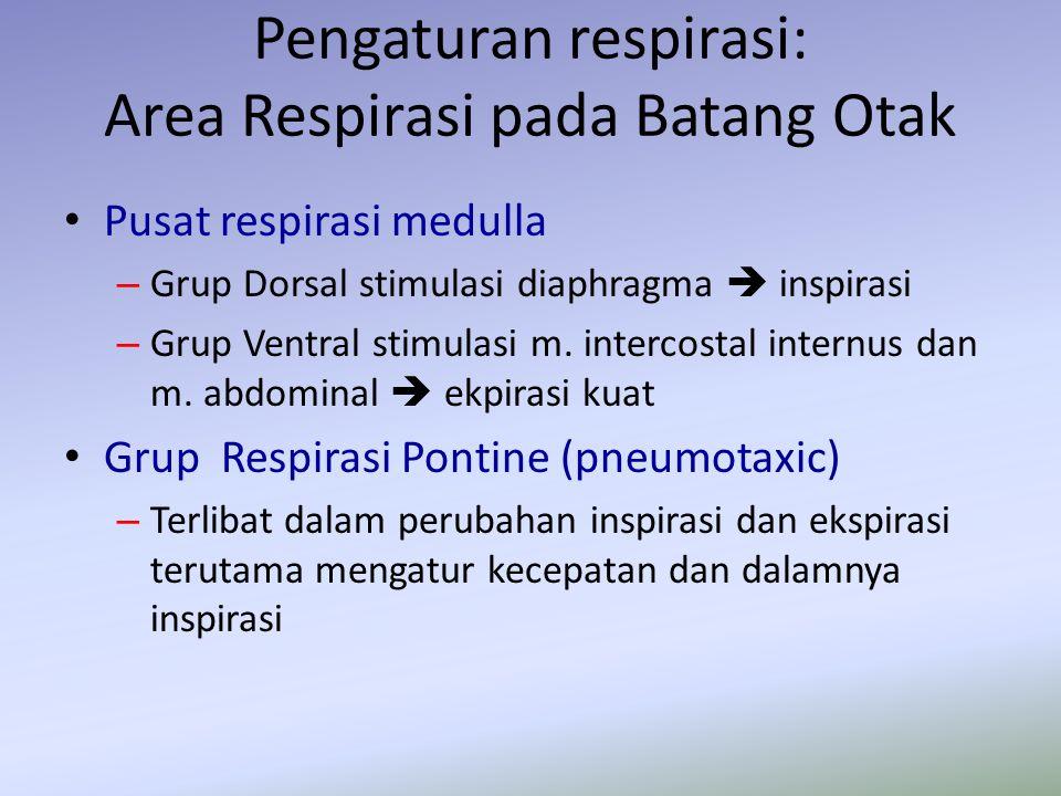 Pengaturan respirasi: Area Respirasi pada Batang Otak Pusat respirasi medulla – Grup Dorsal stimulasi diaphragma  inspirasi – Grup Ventral stimulasi