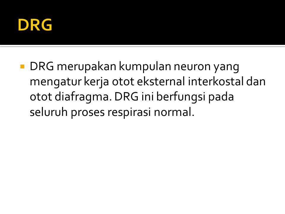  DRG merupakan kumpulan neuron yang mengatur kerja otot eksternal interkostal dan otot diafragma. DRG ini berfungsi pada seluruh proses respirasi nor