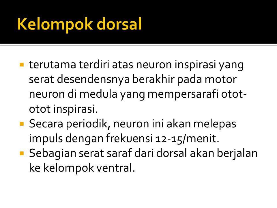  terutama terdiri atas neuron inspirasi yang serat desendensnya berakhir pada motor neuron di medula yang mempersarafi otot- otot inspirasi.  Secara