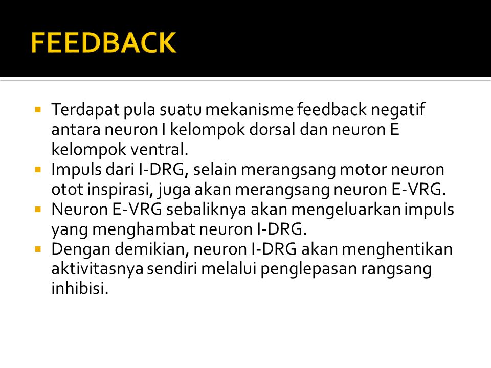  Terdapat pula suatu mekanisme feedback negatif antara neuron I kelompok dorsal dan neuron E kelompok ventral.  Impuls dari I-DRG, selain merangsang